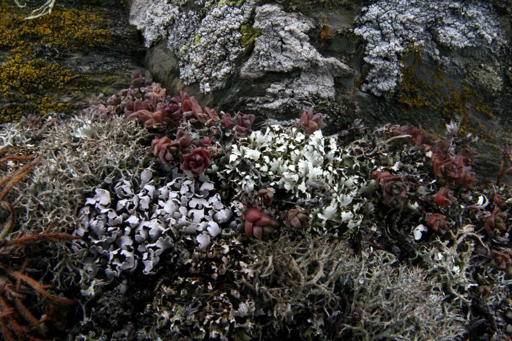 Fente rocheuse avec lichens