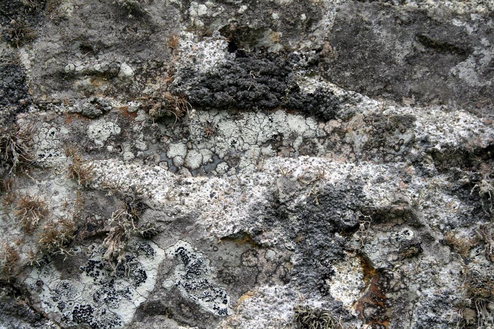 Mur Nord de Chapelle